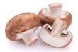 Leinwandbild Motiv Fresh mushrooms on white background