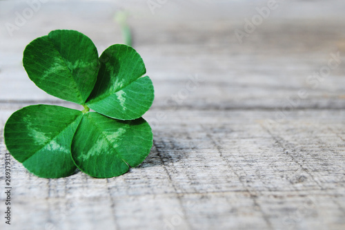 Photographie  Single green four leaves clover on gray wooden board background close up