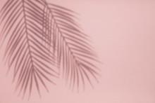 Tropical Palm Tree Leaf Shadow...