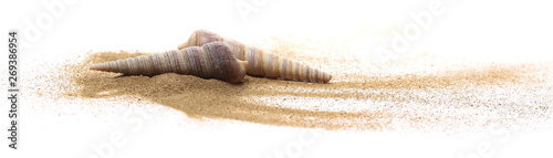 Sea shell in sand pile isolated on white background - 269386954