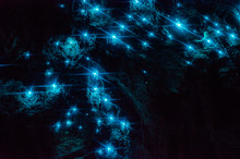 Bioluminiscent Glow Worms Shin...