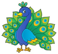 Peacock Theme Image 1