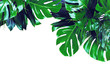 canvas print picture - Close up of bouquets of various dark green fresh tropical leaves isolated on white background. Design template. Frame with copy space for text. Top view, flat lay