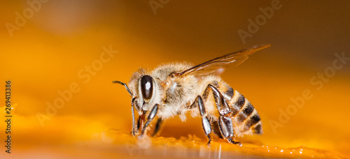 Tuinposter Bee Macro shot of bees Sweet drink
