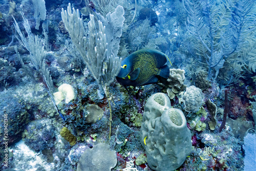 Fish among coral reef underwater, Dive Site, East Wall, Belize