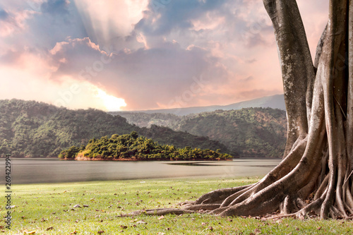 Foto auf Leinwand Schokobraun Tree landscape with trunk and roots spreading out beautiful on grass green with mountains and river nature background with clouds sun shines through rays of light in the illuminated picturesque sky.