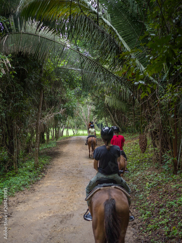 Tourists riding horses, Chaa Creek Road, Chaa Creek Nature Reserve, San Ignacio, Canvas Print