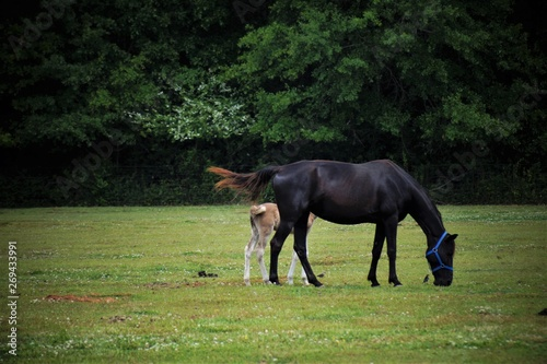 Horse and colt in a pasture