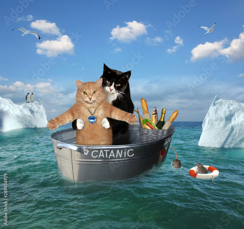 The two brave cats are drifting in the steel washtub among the icebergsin the sea Wallpaper Mural