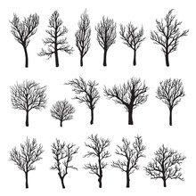 Trees Without Leaves Black Gra...