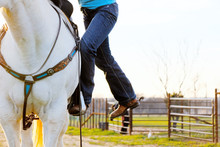 Western Lifestyle Shows Girl In Cowboy Boots Mounting Gray Horse To Go Horseback Riding.
