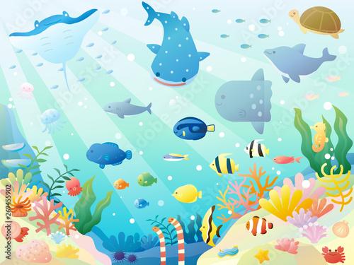Sea animals3