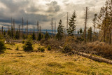 Old dry wild and felled wood and cloudy sky