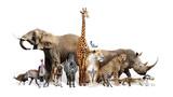 Fototapeta Zwierzęta - Safari Wildlife Group on White