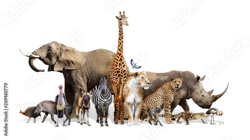 Safari Wildlife Group on White Wallpaper Mural