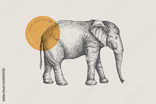 Photo  Image of a large African elephant, drawn by graphic lines on a light background