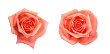 Collection Of  Orange Rose Isolated On Black Background, Soft Focus And Clipping Path