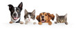 canvas print picture Cats and Dogs Peeking Over White Web Banner