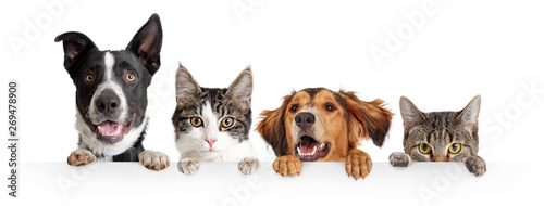 Cats and Dogs Peeking Over White Web Banner - 269478900