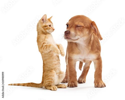 Funny Puppy Scowling at Playful Kitten Fototapeta