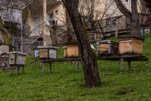 Bee Stocks In Svanetia