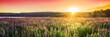 Leinwandbild Motiv Sunset over field with wild flowers, spring blossom