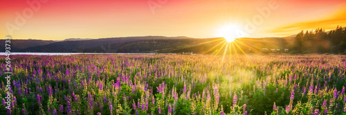Poster Orange Sunset over field with wild flowers