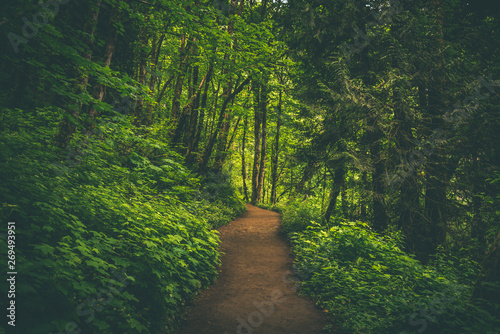 Cadres-photo bureau Route dans la forêt Path through vibrant lush green Pacific Northwest summer forest