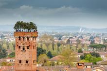 Guinigi Tower In Lucca, Italy