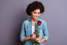 Close Up Photo Beautiful Amazing She Her Dark Skin Lady Cheer Flirty Hands Arms Big Red Rose Toothy Satisfied Boyfriend Husband Surprise Wear Casual Jeans Denim Shirt Isolated Grey Background