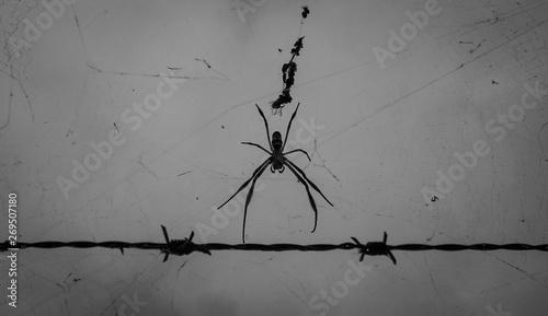 Photo araña alambrado
