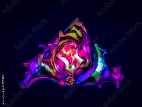 Surrealistic pop-art colored rose blossom macro on black background, still life fine art  flower close-up of a red pink violet yellow blue green colored single isolated bloom