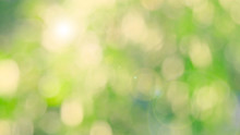 Nature Yellow Bokeh Sun Light Flare And Blur Leaf Abstract Texture Background, Blurred Natural Green Leaves Yellow Background. Stock Image Of Bokeh Light From The Sun Through The Leaves With Copyspace