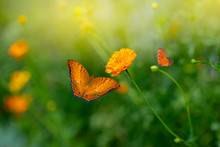 Yellow Butterfly And Orange Flowers For Beautiful Background