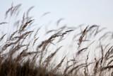 Wiele traw wieje wiatr i stoi w świetle wieczornego słońca - 269559728