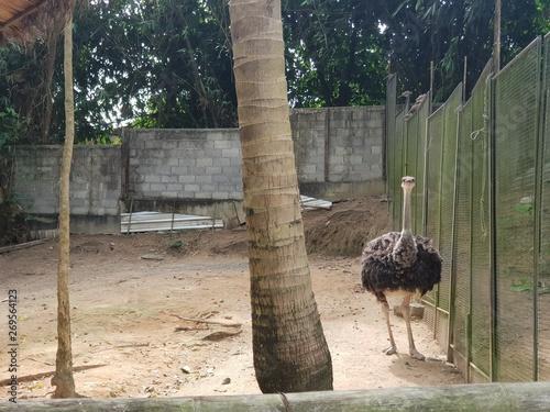 Fényképezés ostrich