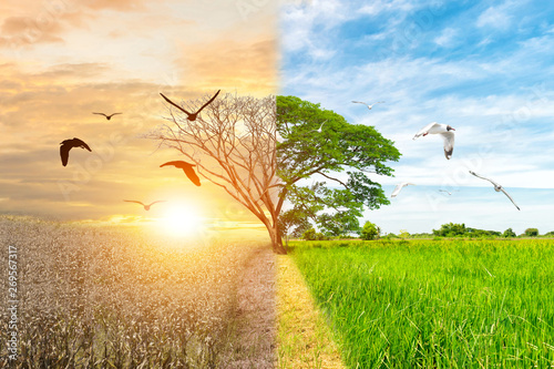 Poster Arbre Ecology concept environment change tree forest drought and flying bird forest refreshing