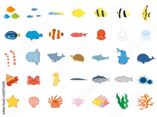 Fotografía 海の生き物 かわいいイラスト素材