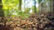 canvas print picture - Junge Buche wächst im Wald