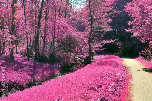 Photo Stands Candy pink Beautiful and colorful fantasy landscape in an asian purple infrared photo style