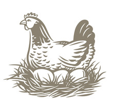 Chicken Farm With Eggs. Hen And Eggs