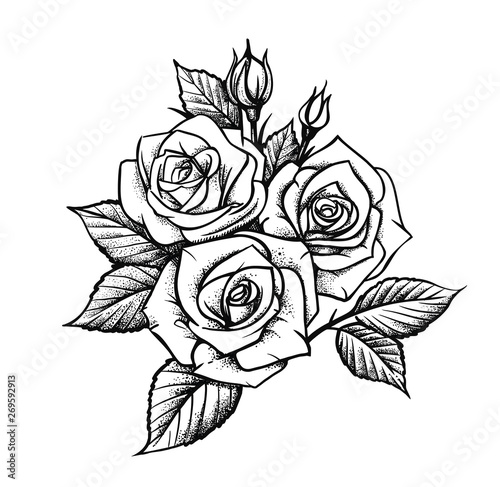 Rose by hand drawing. Beautiful flower on white background #269592913