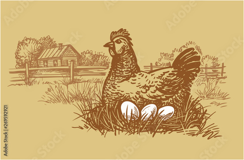 Stampa su Tela Chicken farm with eggs. Hen and eggs