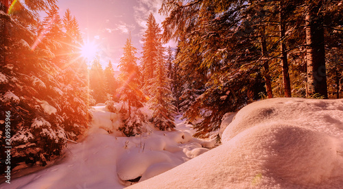 Wonderful wintry landscape. Winter mountain forest. frosty trees under warm sunlight. picturesque nature scenery. creative artistic image. Nature background