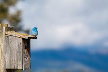 Bluebird On A Birdhouse