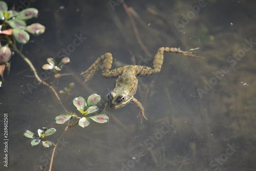 Photo grenouille animal