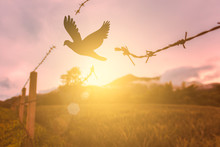 Free Bird Enjoying Nature On Sunset Background, Hope Concept . Soft Focus Picture