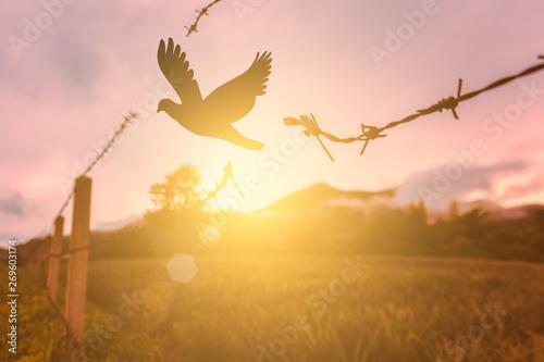 Fotomural free bird enjoying nature on sunset background, hope concept