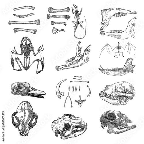 Photo  Magic animal bones design elements set