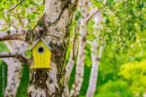 Brzozy z budkami dla ptaków w ogrodzie - 269614515